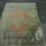 mold damage on rug